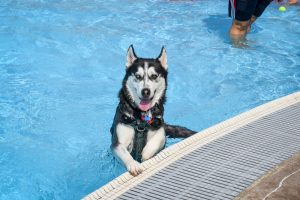 Doggie Paddle Day
